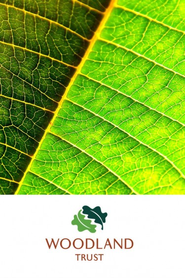 Woodland Trust logo with leaf closeup
