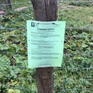 kernowprint pastel green A4 printed public notice attached to a post outdoors